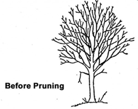 Class 3 Pruning