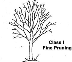 Class 1 Fine Pruning