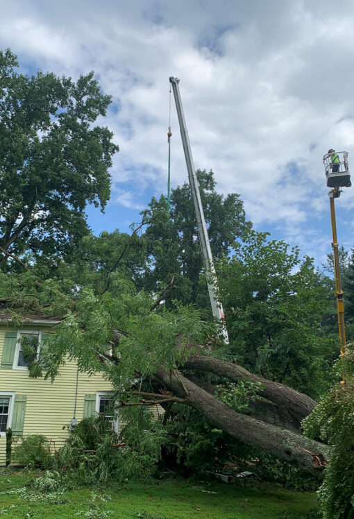 Storm Damage New Jersey 08530